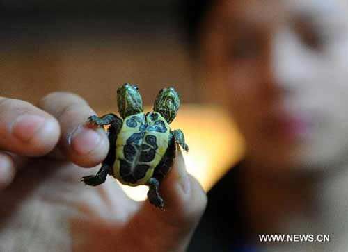 http://3.bp.blogspot.com/-YtCmQ0oTTPA/TZh4QgNSp4I/AAAAAAAAAVA/6Brxb-v8bfw/s1600/turtle-2.jpg