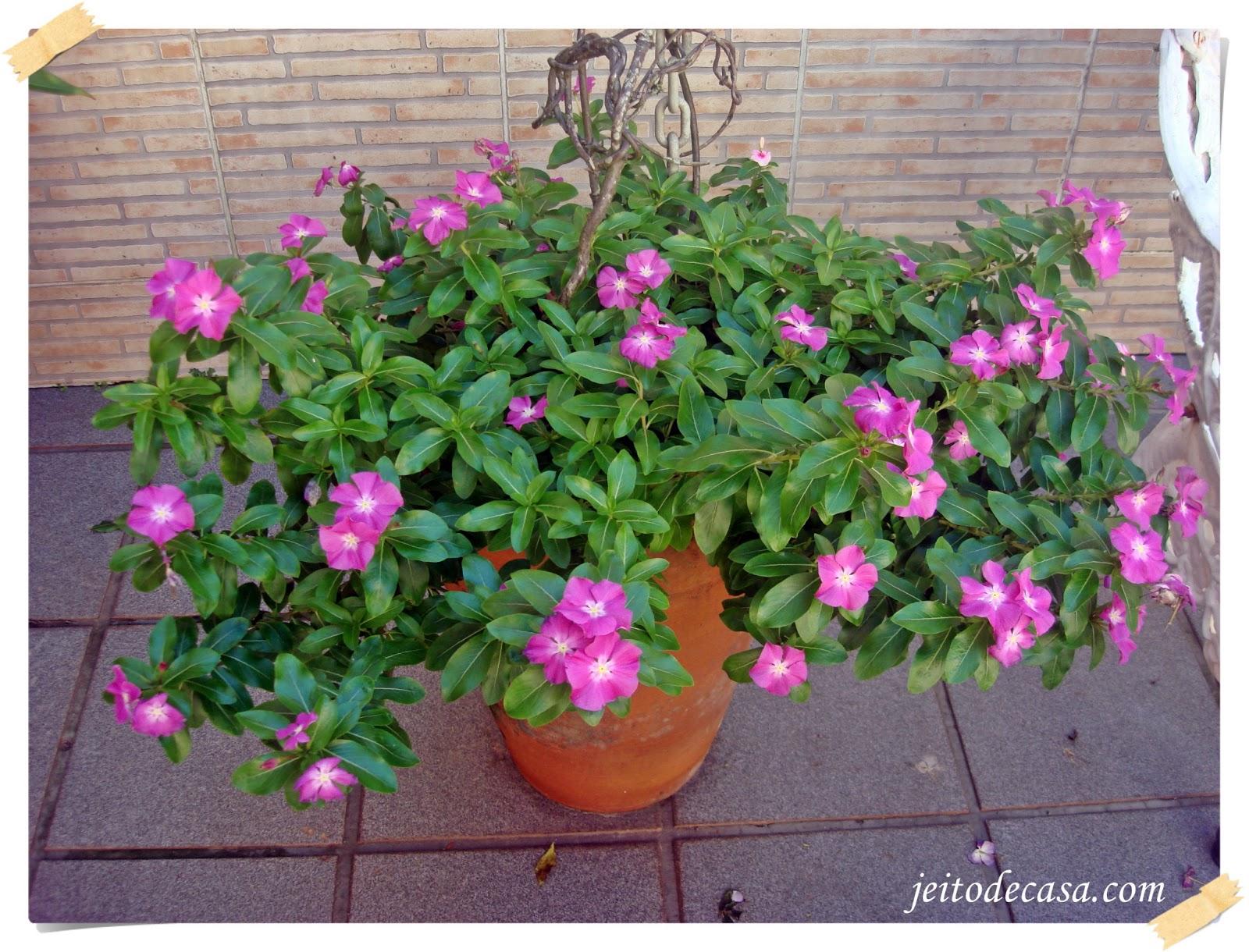 flores jardim perenes : flores jardim perenes: interiores Arquitetura e Estilo pessoal: Vinca, uma flor voluntariosa