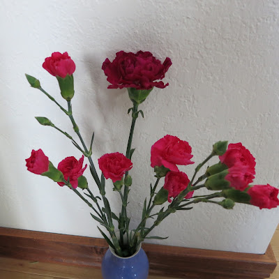 carnations, Dianthus caryophyllus