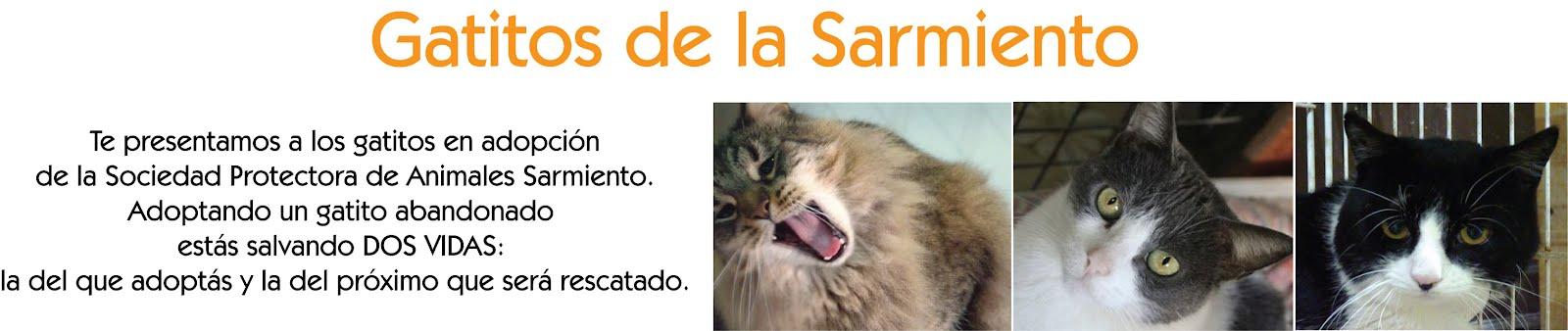 Gatitos de la Sarmiento