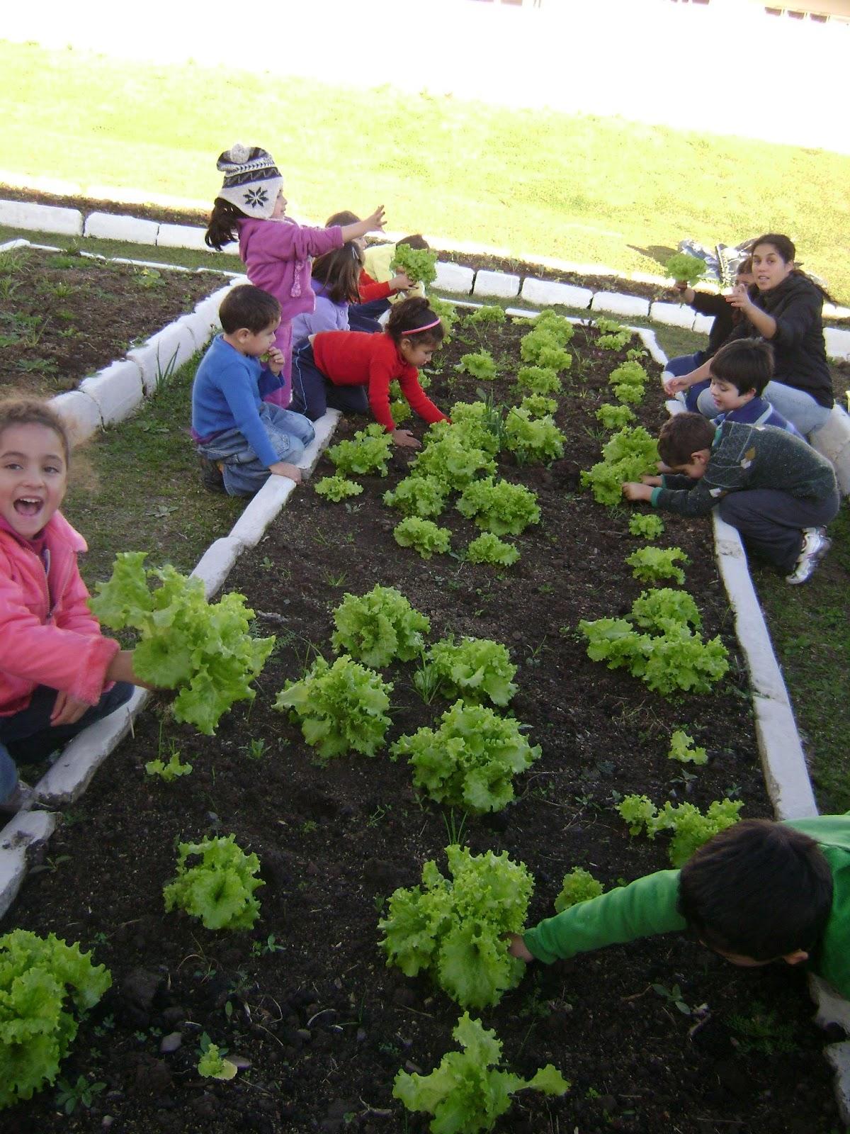 horta jardim e pomar:Carahá de Cara Nova: Horta, pomar e jardim do CEIM Profª Valéria