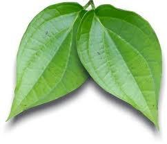 manfaat daun sirih, daun sirih