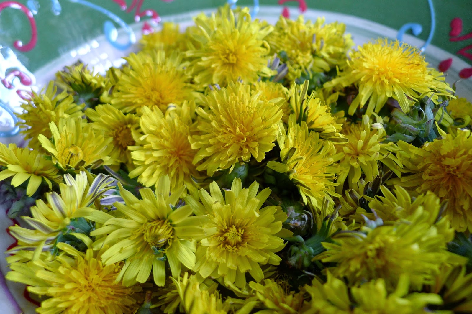 Foraging for dandelions, recipes