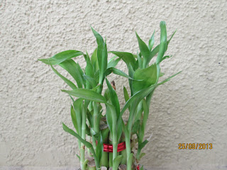 Design green india best tips for growing indoor plants for Low water indoor plants