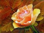 Rose wallpapers