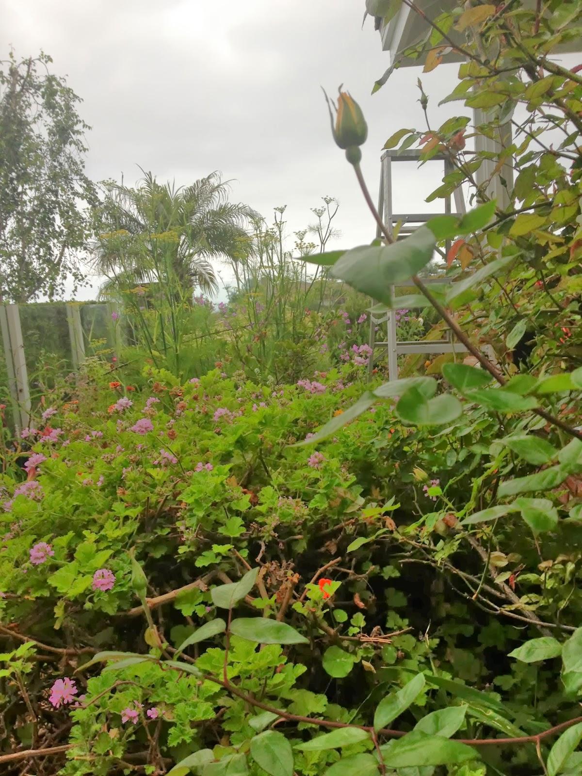 natural mosquito repellants Amazoncom : repel lemon eucalyptus natural insect repellent pump, 1 unit, 4-oz : mosquito repellent : garden & outdoor.