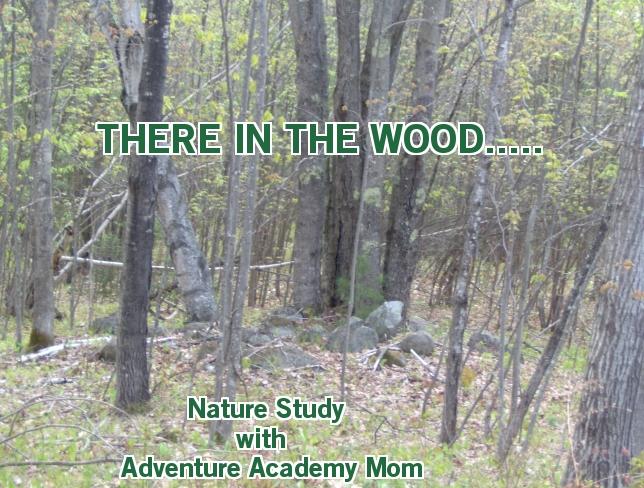 http://adventureacademymom.blogspot.com/