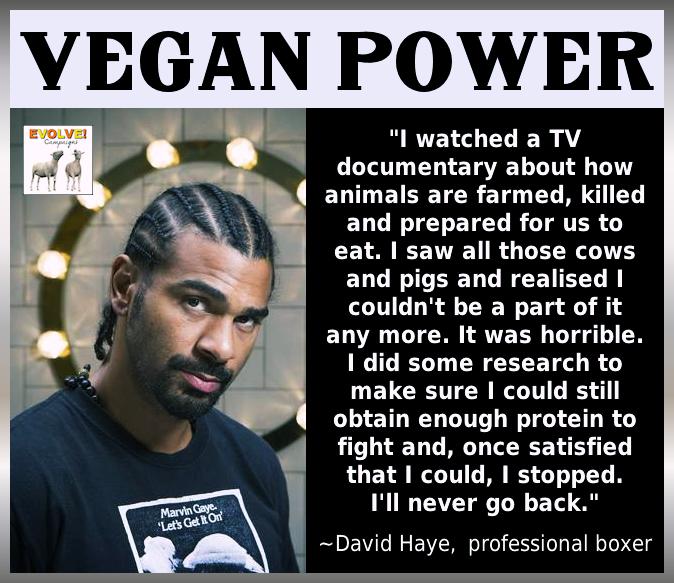 morrissey vegetarianism quotes