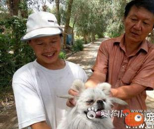 中國四耳狗 粉紅貓