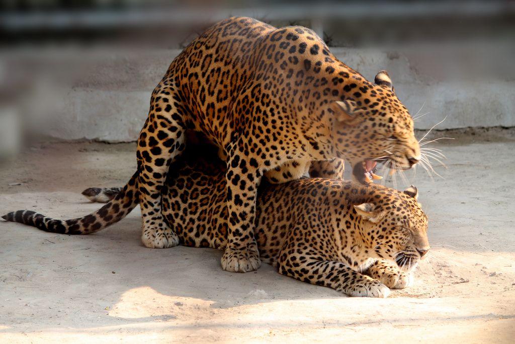 13. At New Delhi Zoo