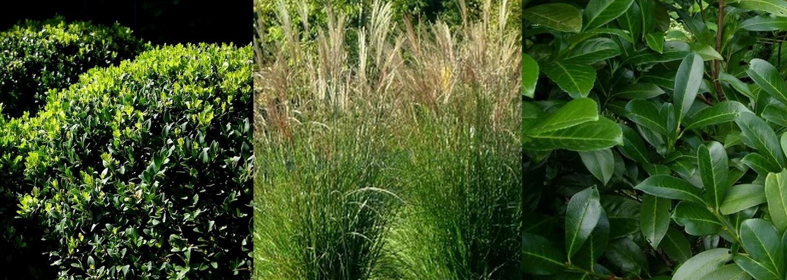 Gartendeko blog gartenideen pflanzen als dekoelemente - Gartenideen pflanzen ...