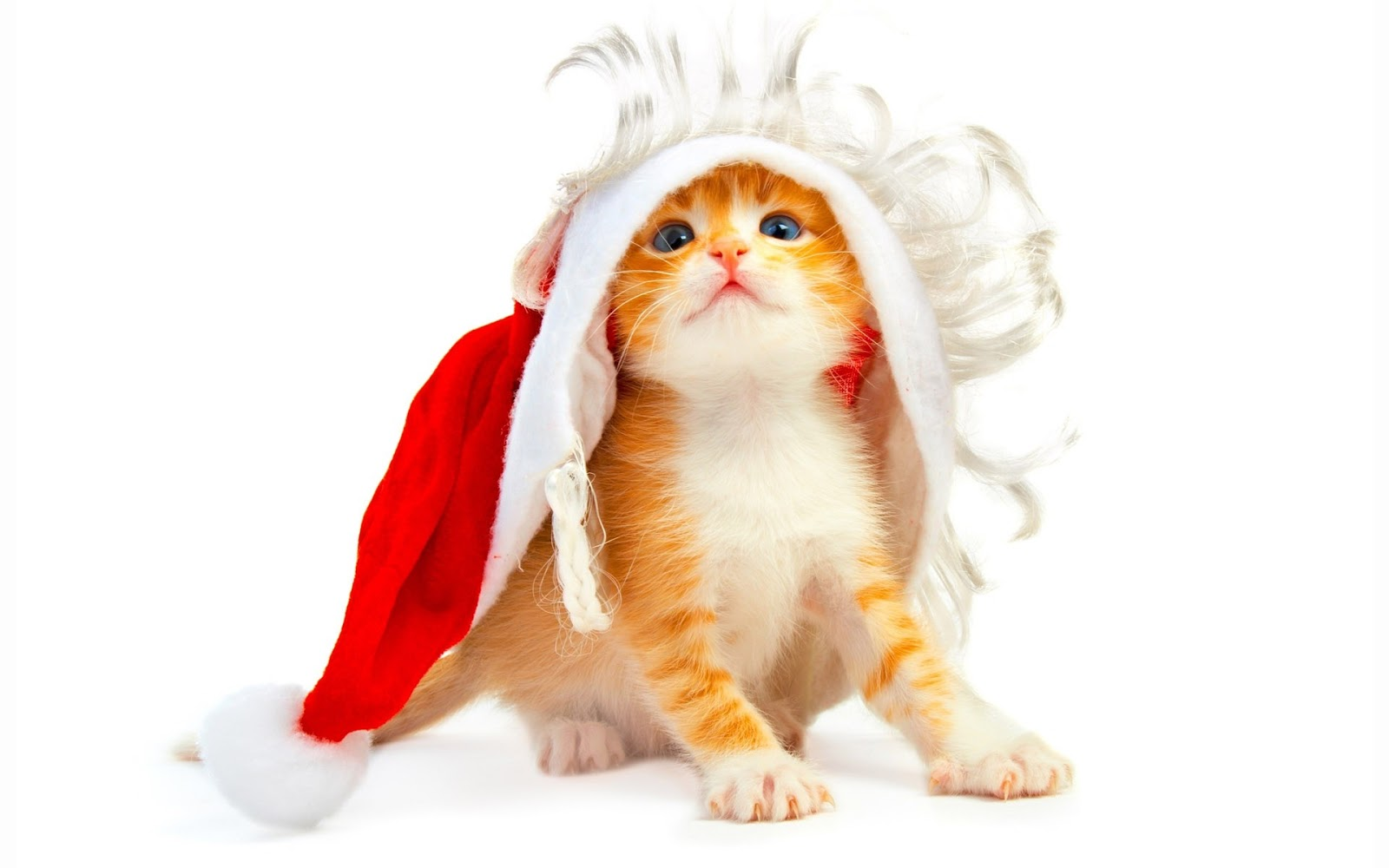funny cute cats santa cat pictures