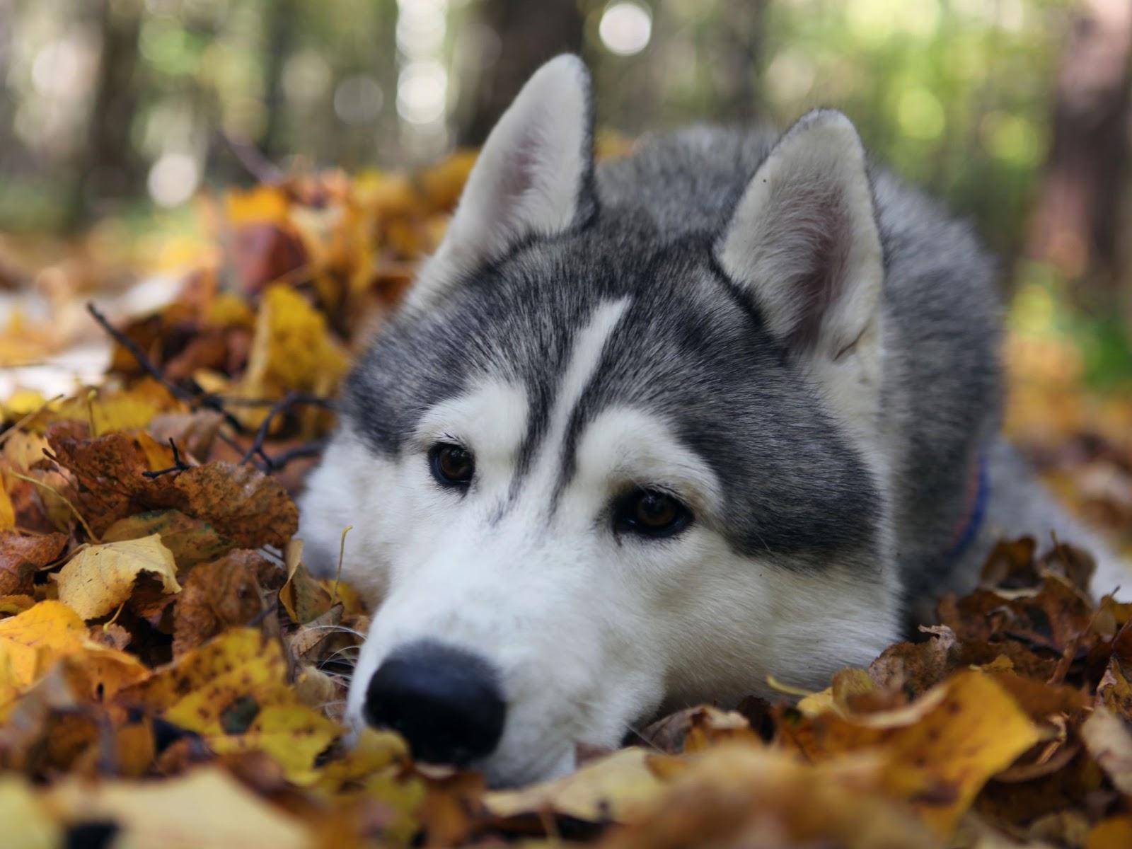 Puppy Wallpaper Free Download