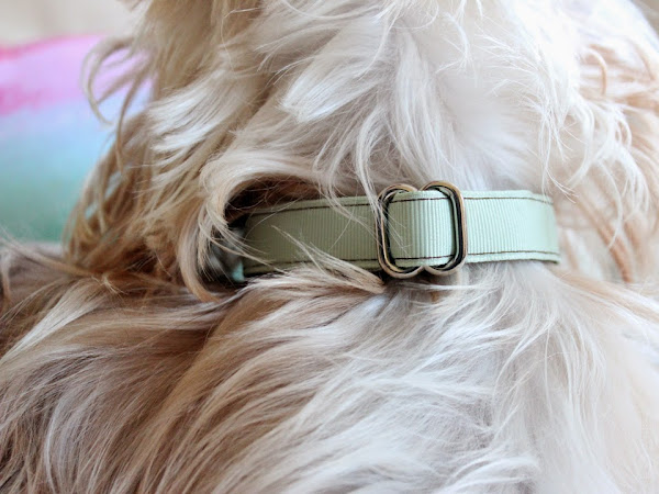 Review: Mattie & Margot Dog Collar