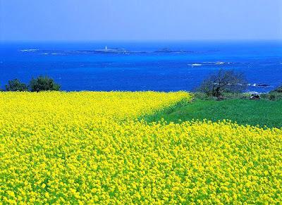 http://3.bp.blogspot.com/-Ywvf4NjVuTM/TjtE1ZOpXWI/AAAAAAAAANk/NW14yPdtOZ0/s1600/Jeju+Island.jpg