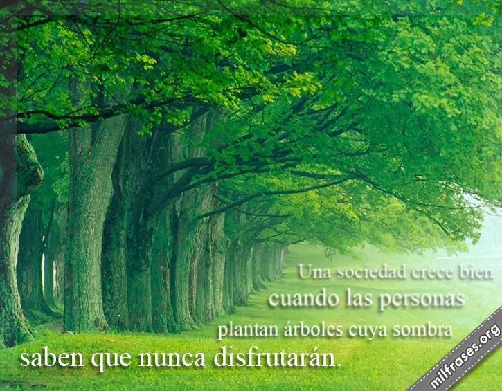frases de árboles, proverbio griego, una sociedad crece bien