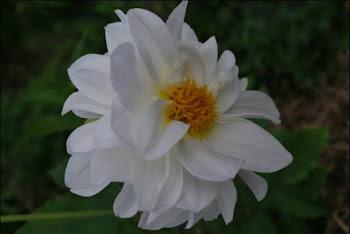 Bukit Lawang Florist