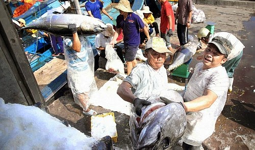 http://tuoitrenews.vn/business/21566/vietnams-1st-catch-of-tuna-fished-with-japanese-technology-sells-out-in-japan