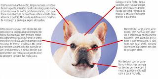 A cabeca e muito forte  O Bulldog Baba Muito
