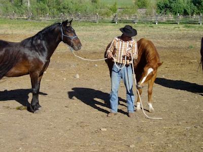 Susurrador de caballos trabajando con mustangs