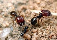 Pest Control Gosford