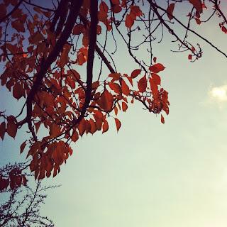 Herbstlaub vor blauem Himmel