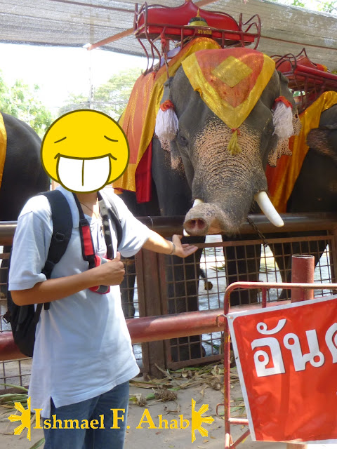 Me touching a Thai elephant in Ayutthaya Historical Park