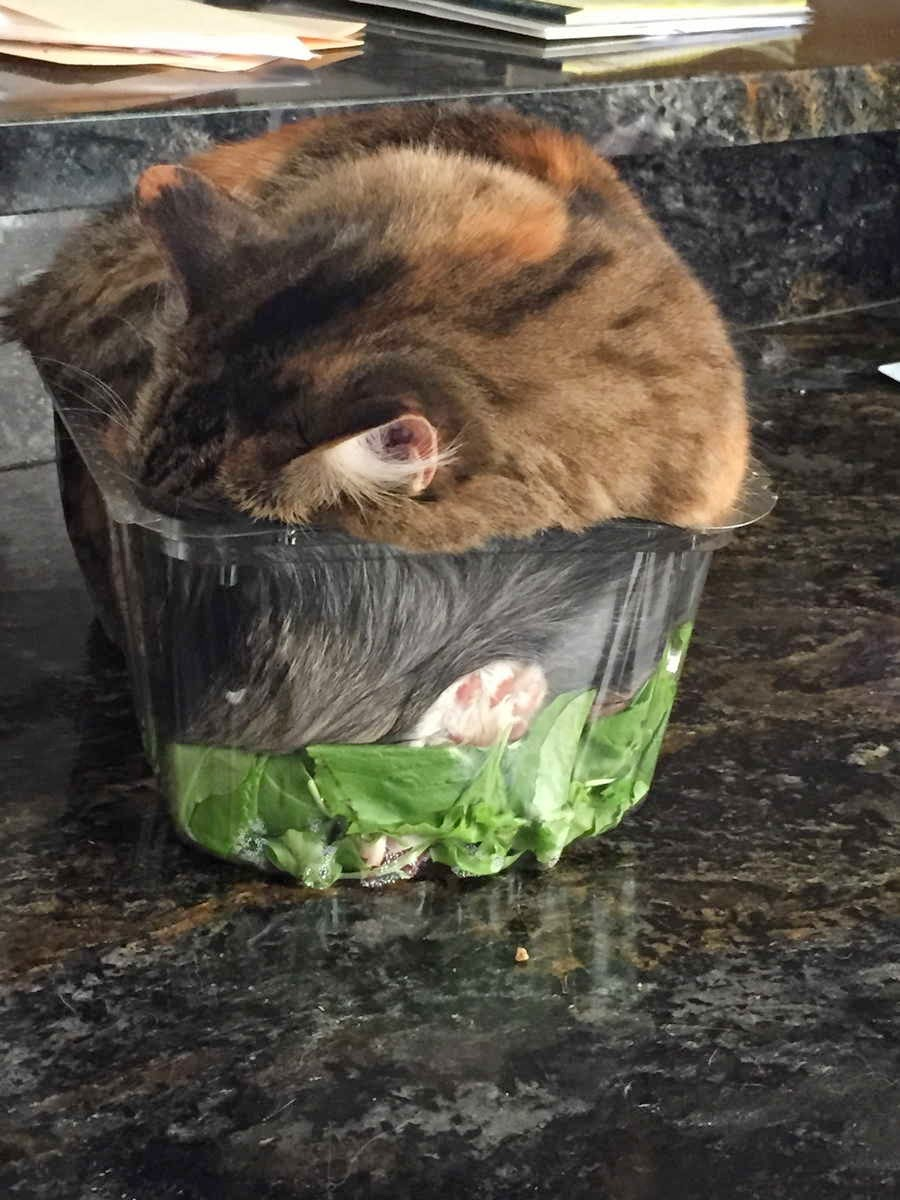Funny cats, cat photo, best cat pictures, cute cats