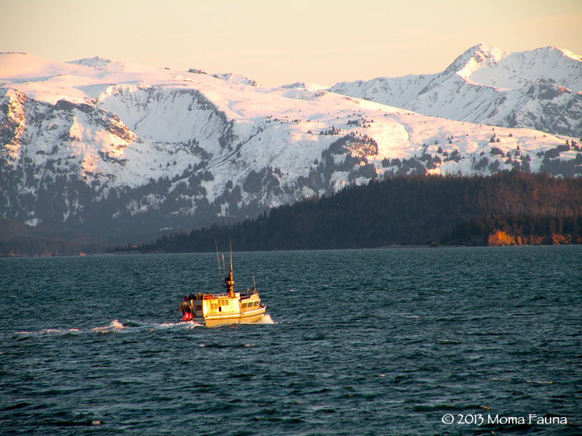 Traveling by boat in the Crazy Northwestern Sunlight.  Nighttime in Homer, AK.