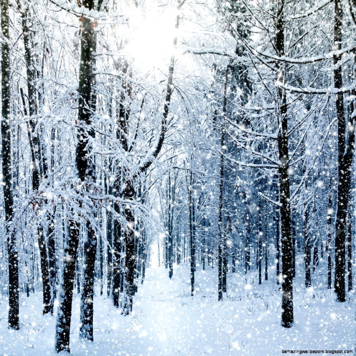 Winter Forest Stock Photo Picture And Royalty Free Image Image