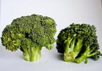 Le Brocoli, aliment anti-âge