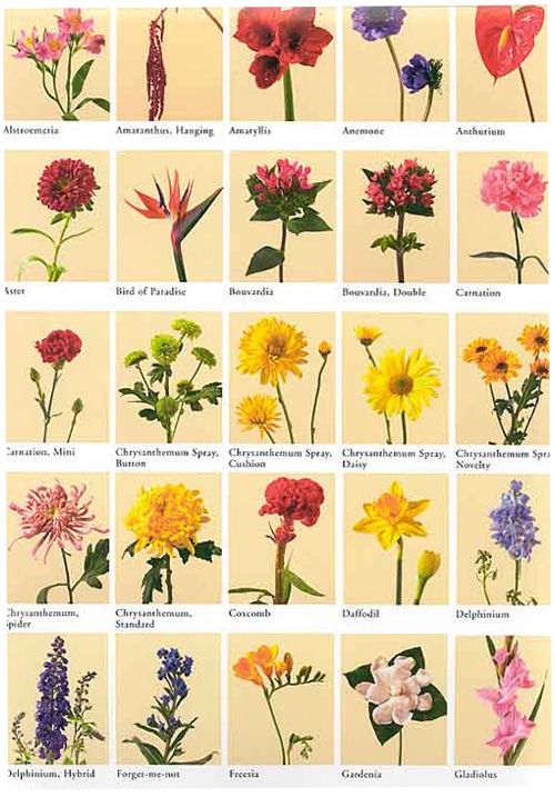 Flower Meanings Flowers World