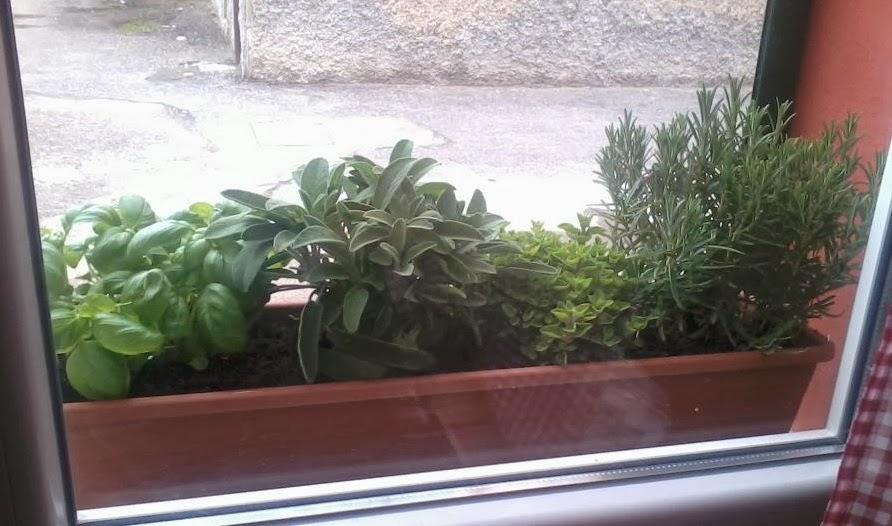 Vasi per piante aromatiche idee per il design della casa - Piante aromatiche in casa ...