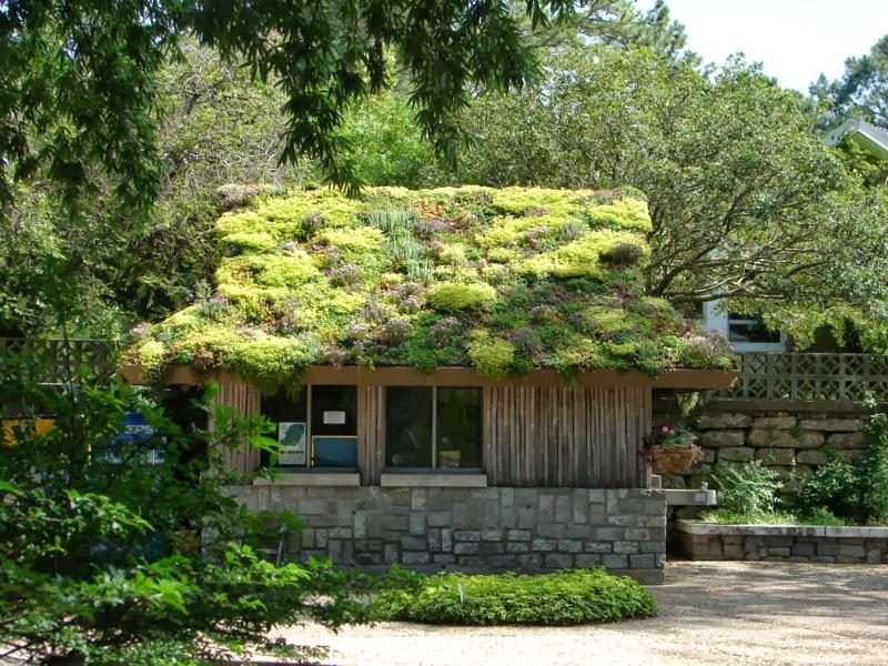 Zeleni krovovi   Zeleni+krovovi+11
