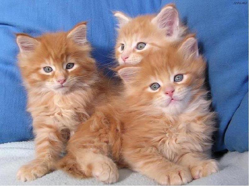 Foto Foto Kucing Lucu Dunia Meong