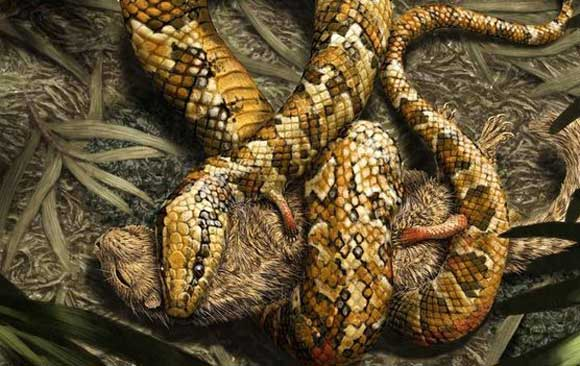 descubren-fosil-de-serpiente-de-cuatro-patas