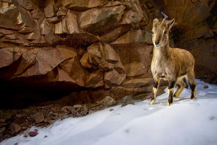 Steve Winter, fotografía de vida salvaje