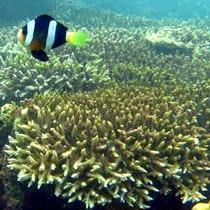 5 Tanda Spot Mancing Yang Banyak Ikannya