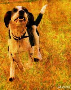 COSIMIX,  il cane giallo volante!/COSIMIX, der gelbe fliegende Hund