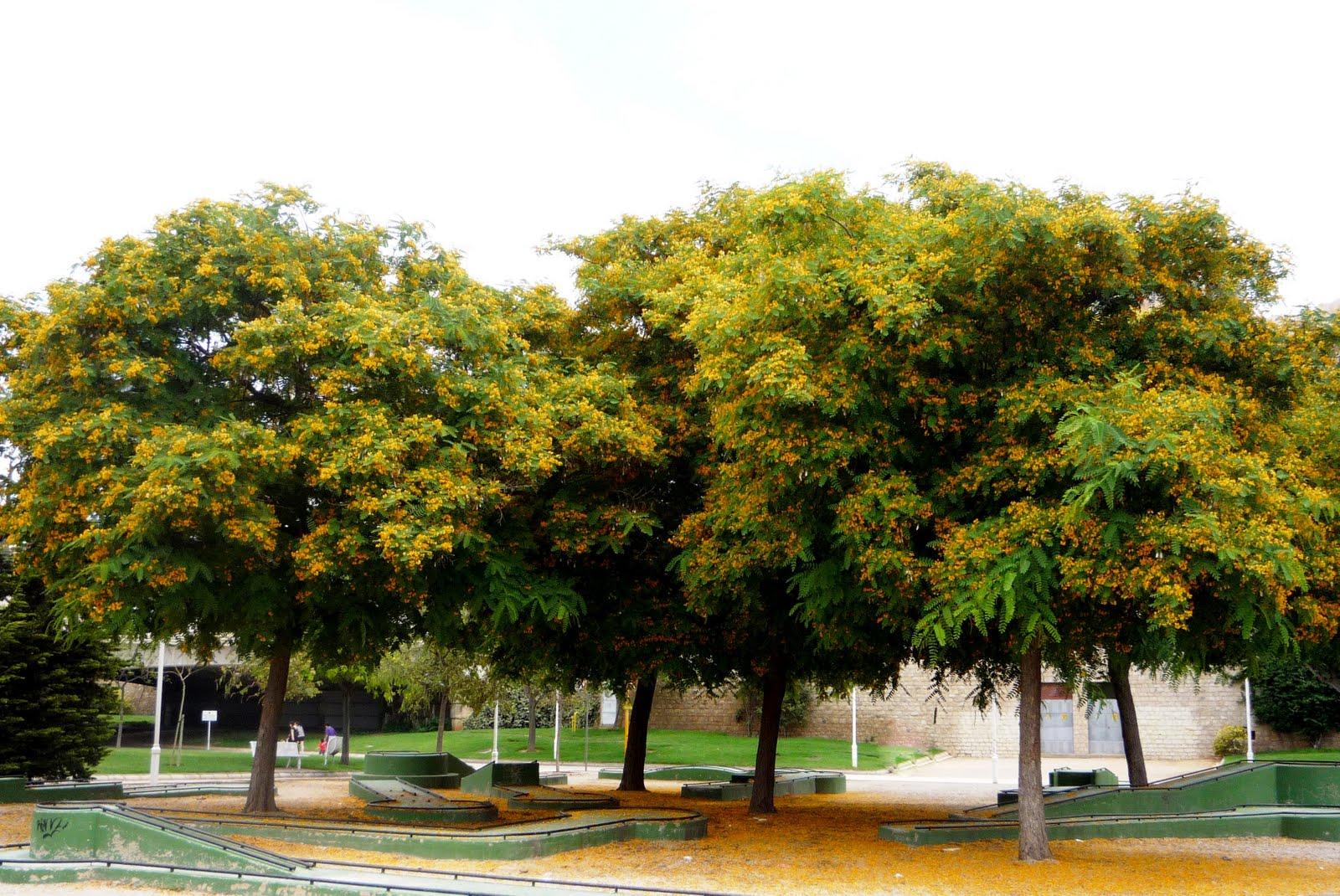 Valencia jardines del r o turia rboles for Arboles de hoja perenne de jardin