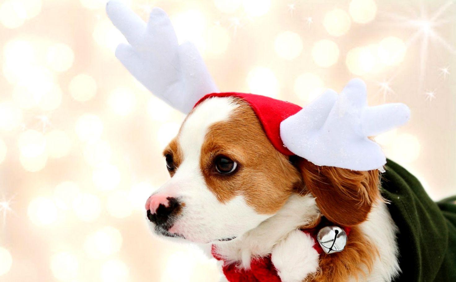 Cute Christmas Puppies Desktop Wallpaper