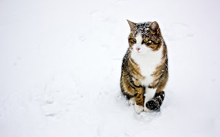 Cat Winter Snow HD Wallpaper