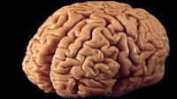 tips, cara, meningkatkan, kinerja, otak