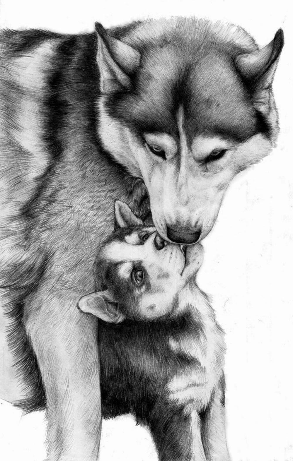 Черно белое фото волк 6