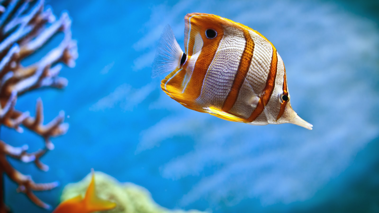 Most Beautiful Colorful Fish Hd Pictures Exotic Collection