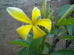 Kemboja