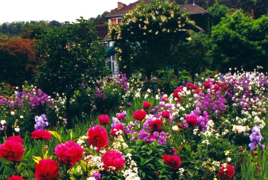 Imagens Gratis Lindos Jardins Imagens Da Natureza
