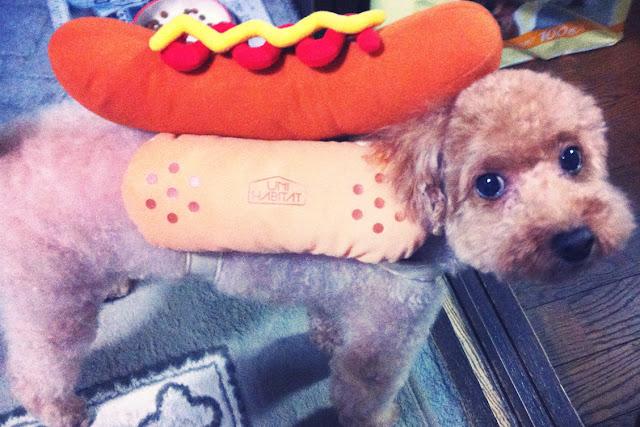 kostium dla psa hot dog uni habitat