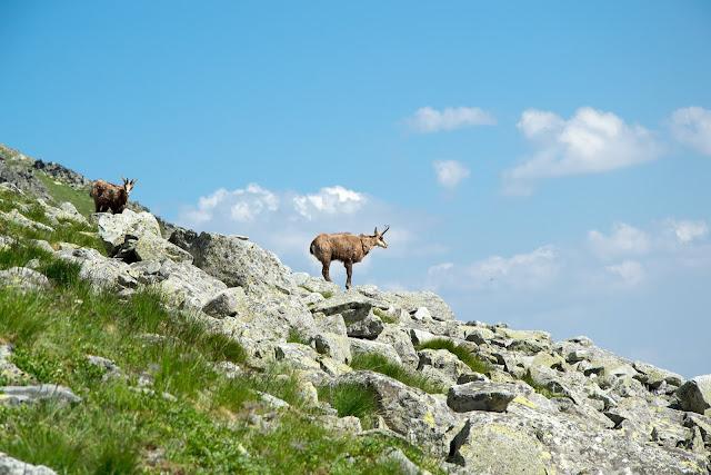 slovakia-bystra-lavka-hike-ibex