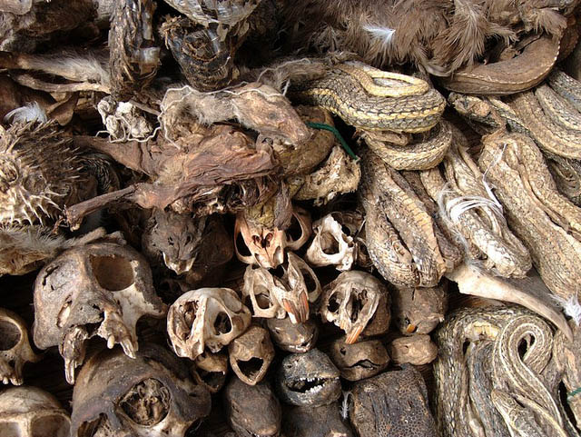 Dried skulls sells here